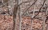 Three Robins (blazer8696) Tags: usa robin unitedstates connecticut ct american avon 2012 collinsville turdus migratorius ecw furandfeathers img5067 t2012