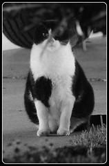 Black and White (VinceFL) Tags: blackandwhite cat nikon noflash nightlight manfrottotripod tamronaf7030mmf456dildtelephotomacrolens nikond7000 vincefl doubleexposureorblur