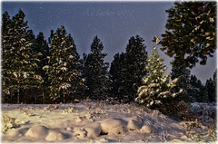 Winter Wonderland At Dusk (SimplyAmy74) Tags: nightphotography trees winter snow animal nocturnal snowy creative tracks idaho snowfall wonderland postfalls northidaho