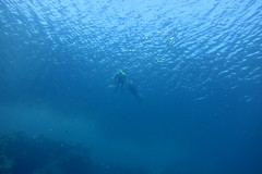 deep blue (cc)