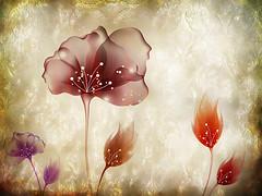 From Iceland. (Tta. 27.12.1964.) Tags: flowers flower nature iceland fantastic fantasy imagination sland photomix blinkagain rememberthatmomentlevel1 me2youphotographylevel1 besteverdigitalphotography