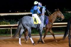 2012-11-01 (57) r5 Luis A. Batista on #4 Miracle Mookie (JLeeFleenor) Tags: horses caballo cheval uma cal westvirginia jockeys horseracing cavallo cavalo pferd equestrian kin kuda alogo equine hest thoroughbreds soos hevonen cuddy paard cavall kon koin 馬 hast charlestownraces häst ceffyl donkeyride лошадь 马 koń faras hestur סוס perd thoroughbredracing حصان konj кон άλογο घोड़ा capall beygir yarraman pfeerd luisbatista luisabatista