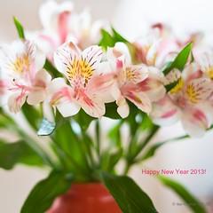 Happy New Year 2013 !!! (Anna Omiotek-Tott) Tags: flowers stilllife nature closeup nikon softfocus mf alstroemeria flowerportrait rawconversion flowersinavase lightroomprocessed studioflowers nikon50mm18g annaomiotektott