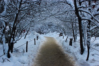 Curry Village Winter Tunnel