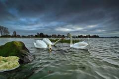 Nip In The Air (jakeof) Tags: water clouds bosham swans davidjacobs jakeof