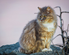 Cats of the Bay (Mike Filippoff) Tags: sunset cats water beautiful grass bay cozy eyes rocks colorful warm alone sad personality felines sanfranciscobay inviting fostercity sanmateobridge subset cautious timid sanmateocoast baycats