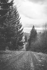 skid (joshsdickson) Tags: road trees winter sky blackandwhite white mountain black tree nature pine clouds oregon contrast dark portland landscape photography woods soft moody gloomy sad gritty retro indie depressing photooftheday picoftheday pictureofhteday