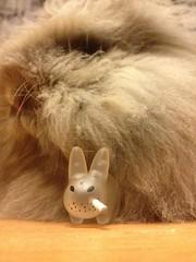 Smorkin Labbit by Kozik (Kidrobot) & Luna, Dwarf Angora Rabbit! (Damien Saint-é) Tags: art toy toys design vinyl kidrobot kozik smorkin labbit
