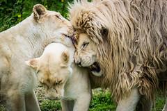 Wild Love.