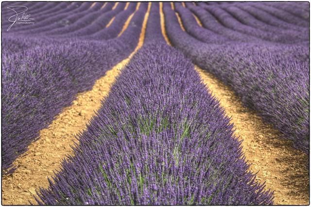 france canon violet lavender provence f11 70200 alpesdehauteprovence valensole canonef70200mmf28lis ef70200mmf28lisusm canoneos5dmarkii