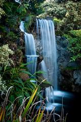 DSC_0153-9 (ddroke) Tags: california longexposure flower nature waterfall nikon arboretum d90 lacountyarboretum droke