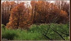 Enfasi di colori (Carassius-al) Tags: alberi photoshop group troll piante paesaggio artistry magik postprocessing greenscene rememberthatmomentlevel1 rememberthatmomentlevel2