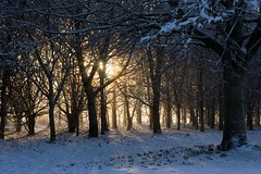 15-1-2013 (Copperhobnob) Tags: trees winter light sunlight snow nature beautiful golden aberdeenshire shade rays portfolio adencountrypark poty13l localexhib