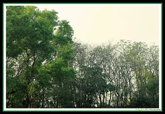 An island in Lake. (soumen19xx) Tags: wood trees sky india color green art nature leaves yellow digital canon dark geotagged island photography eos landscapes twilight stem flora focus asia branch natural photos outdoor sigma growth t3 chlorophyl dense 70300 cs3 stillphotography 1100d