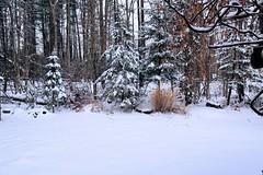 A touch of winter (howardj47) Tags: canon 5d howardj markiii