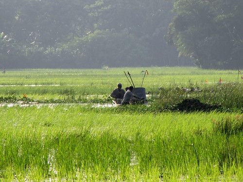 Installation of the Fish Habitat Development Rings in the fields in Bangladesh.Photo by Mélody Braun, 2012.