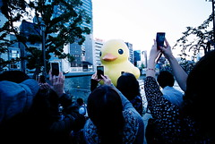 here comes the duck (troutfactory) Tags: sculpture art film yellow japan duck artwork rangefinder wideangle  osaka analogue kansai nakanoshima   15mmheliar  natura1600 voigtlanderbessal inflatableduck giantduck florentijnhofman weirdcoloration