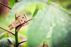 DAY24/365 煩惱也不曾離去。 (woonws) Tags: life light plant green nature toys photography bokeh feeling simple rainingday 生活 danbo 心情 攝影 雨天 canon500d 2013 danboard 紙箱人 365攝影日記