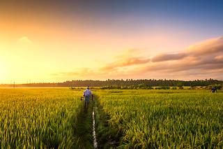 My way | Sundarapandiyapuram Sunrise