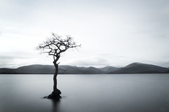 Milarrochy Bay - Loch Lomond (Alan J Campbell) Tags: tree water alan canon photography bay scotland glasgow sigma filter lee loch campbell lomond 1850 500d 10stop milarrochy