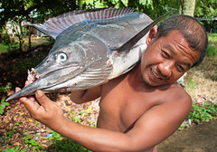 Koh Mook ~ Marlin (Amsterdam Today) Tags: world blue sunset sea wild sun white fish black game beach nature monster thailand island islands big fishing fisherman sand paradise fighter gulf ultimate south great like fast sugar virgin glorious jade ko massive soul thai planet tropical destination serene lonely local dorsal swimmers fin hua koh unforgettable bigger marlin snout stronger mook techniques spear andaman laem muk primordial rigid kohmook muuk
