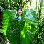 "<b>Life Size Leaves at Santa Lucia!</b><br/> ""Ecology of Ecuador,"" J-Term 2013, photo by Kirk Larsen<a href=""http://farm9.static.flickr.com/8083/8445905000_31a70e5145_o.jpg"" title=""High res"">∝</a>"