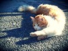 yoga-Rolly (cuginAle) Tags: shadow orange cat rolly tc100 flickrandroidapp:filter=none