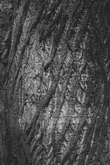 Bark I (ChrisDale) Tags: wood detail tree texture closeup dark wooden treetrunk bark scales trunk treebark rough textured barktexture chrisdale chrismdale