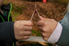 334/365 wishbone (sullivanj487) Tags: 365 nikon d5000 wishbone kids fun hands cheater tiny