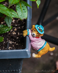Hang In There_4369 (smack53) Tags: smack53 dog statue trinket plant summer summertime nikon d300 nikond300