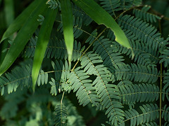 PhoTones Works #8037 (TAKUMA KIMURA) Tags: photones olympus penf takuma kimura      landscape scenery nature leaf plant