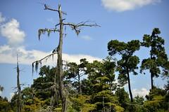 Sky view (holdit.) Tags: tx texas visitorcenter swamp nature natural