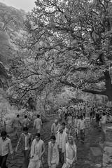 ADS_0000110090 (dickysingh) Tags: ranthambore ranthambhore hindu festival