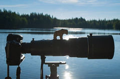 I am Nikon D-Bear (Samuel Raison) Tags: camera nikoncamera nikon outdoor out ours bear oursbrun brownbear wildlife wildlifephotographer nikongear gear finlande finland d3 nikond3 nikon4200400mmafsgvr scenery lake lac sunlight nikonpassion shadow shadows light lights nikkor