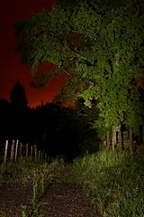 Tree on fire (-Baptiste Coub-) Tags: baptistecoubronne 35mn bynight contrast d7100 forest night nikon trees chablais ciel exposure long nightlandscape nightsky outdoor sky wow leaf fire woods paysage village silhouette sunlight colours path paisaje home