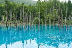 Blue Pond (yiming1218) Tags:      blue pond biei hokkaido water landscape  sony fe 2470mm gm g master reflection japan  cho  f28 sel2470gm ilce7rm2 a7r2 a7rm2 japanese