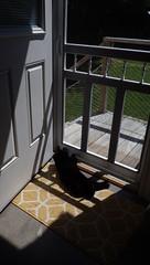 Basking in Scarborough :>))  IMGP5407 (catchesthelight) Tags: kittyinthesun light shadows me