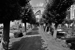 Damme (OliValan 2.0) Tags: kerkhof cimetire cemetery damme flanders vlaanderen flandre