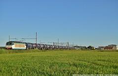 E633 203 (MattiaDeambrogio) Tags: treno treni train trains e633 203 trenitalia cargo borgolavezzaro wascosa