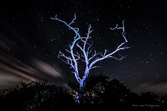Communion (Oliver Wood Photography) Tags: prestbury cheshire night nocturnal