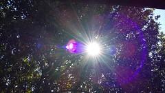 A presena do por do sol em um novo e sensacional prisma!  //  The Sunset presence in a new and sensational prism! (J. Garcia Dias) Tags: por do sol luz prisma sunset lux prism perspectiva perspective roxo rvore tree sombra reflexo branca white vermelha red cu sky