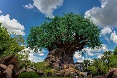 Disney's Animal Kingdom Tree of Life - July, 2016 (rowanb73) Tags: disney disneyworld disneysanimalkingdom animalkingdom treeoflife outdoor