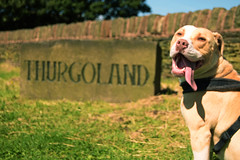Bonnie Thurgoland sign (E Music) Tags: dogs bonnie thurgoland sign england yorkshire