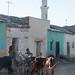 Livestock and minaret