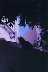 Kiki, august 2014 (Tefilo de Sales) Tags: malta erasmus trip summer film analog analogic fuji fujifilm fujixtra400 xtra 50mm 35mm nikkormatel nikkormat nikon nikkor grain expired cat silhouette