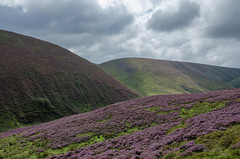 Forest of Bowland: A forest without trees. (Tim Melling) Tags: lancashire forest bowland langden valley timmelling heather moorland