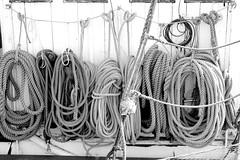 Knots (hannasamuelsson) Tags: rope architecture symmetry art copehagen travel denmark sea ocean lake water open boat sailing rowing sport swimming nature pattern