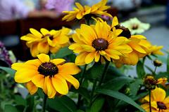Fiori per Nora (marvin 345) Tags: fiori flowers altoadige nature natura