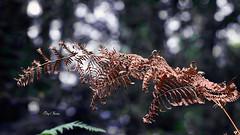 l'automne arrive (png nexus) Tags: nature extrieur out