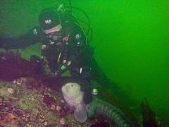 Making friends with a Wolf Eel! (showmesavings) Tags: diving ocean eel wolfeel
